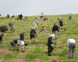 planting native trees new zealand