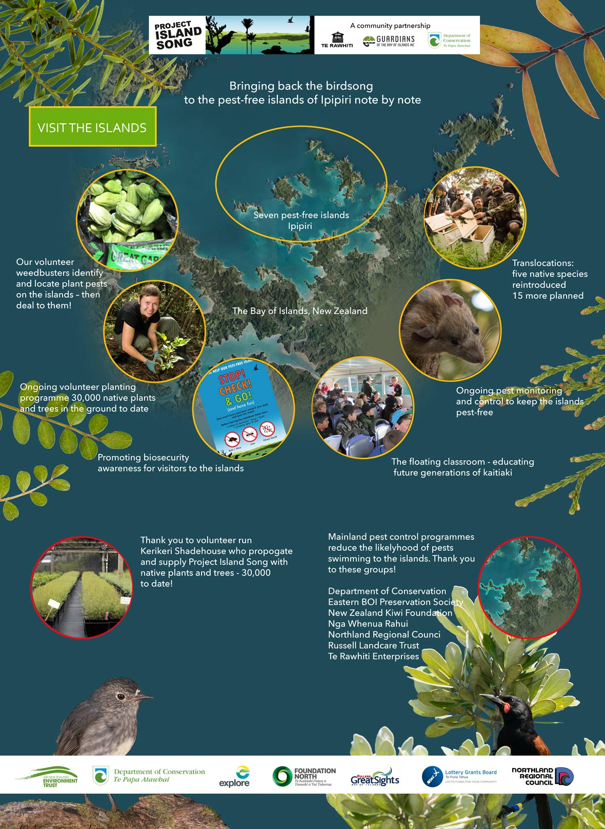This image demonstrates the wide range of activites that make up Project Island Song. Weedbusting, planting programmes, biosecurity, floating classrooms, pest monitoring and control and species trans-locations. Working with Project Island Song are community groups The shadehouse who propogate and prived us with native plants - 30,000 to date! Also mainland pest control groups that reduce the likelyhood of pests swimming from the mainland to the islands